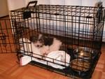 Viggo's new cage