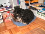 Viggo's bed sure is small!